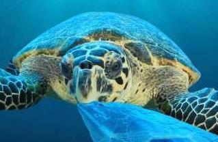 经济学人下载:为什么海龟吃塑料垃圾(2)