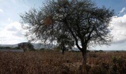 气候变化损害了墨西哥的玉米产量