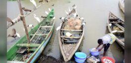 新冠病毒为肯尼亚渔民提供了意想不到的帮助