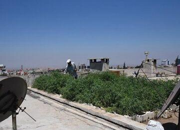 国际英语新闻:Feature: Some Syrians achieve self-sufficiency through farming on rooftops