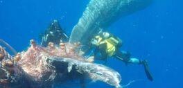 世界范围内捕鱼活动的减缓不太可能拯救稀有物种