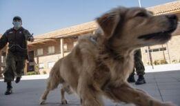 VOA慢速英语:关于新冠病毒和你的宠物