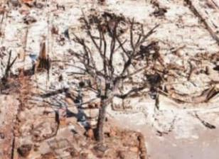 经济学人下载:学会和自然灾害共存(1)
