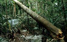 过去20年 全球森林覆盖面积减少近亿公顷