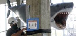 VOA慢速英语:大白鲨来到电影博物馆