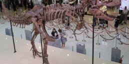 VOA慢速英语:科学家发现了一些恐龙是长得这么大的秘密