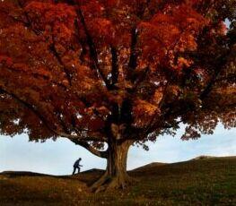 VOA慢速英语:从种子到苍天大树