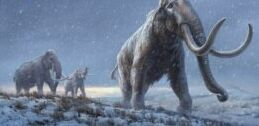 VOA慢速英语:世界上最古老的DNA发现于百万年前的猛犸象