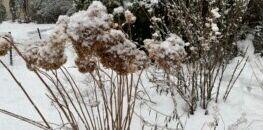 冬季如何欣赏园艺