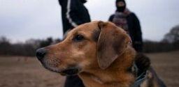 VOA慢速英语:新冠疫情让更多人养狗狗