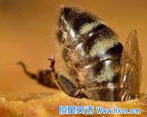 经济学人下载:蜜蜂是最先发明疫苗的物种(2)