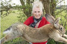 世界上最大的网红兔子意外失踪,主人重金悬赏